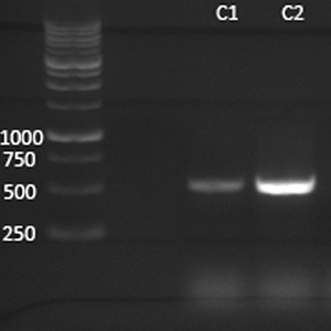 Mycoplasma PCR Detection Kits